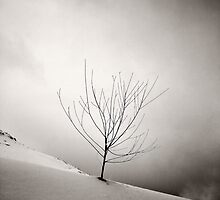 Winter Is Knocking  by Tony Elieh