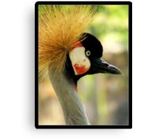 suspicious gray crowned crane Canvas Print
