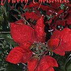 Christmas Poinsettias by Samantha Dean