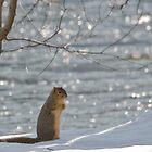 christmas day squirrel by jude walton