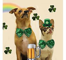 St. Patrick's Day Chihuahuas Photographic Print