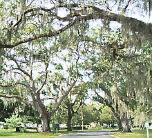 St. Simons Island by Jennifer Jones