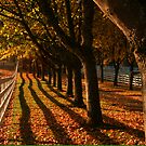 Fall Fence Line by Randy Richards