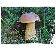 Penny bun Bolete  Fungi Poster
