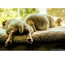 Two Too Tired Photographic Print