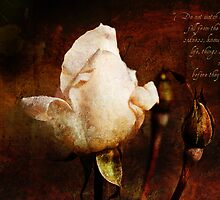 Fading Rose by Alison Cornford-Matheson