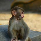 Baby monkey in Pashupatinath Temple, Kathmandu, Nepal by bfokke