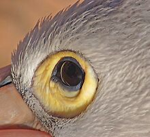 The Eye of the Pelican, Monkey Mia, Western Australia by Adrian Paul