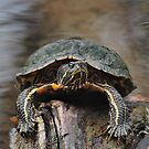 Turtle Grip by Dennis Stewart