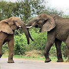 INTERACTION - THE AFRICAN ELEPHANT – Loxodonta Africana - Afrika Olifant by Magaret Meintjes