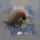 West Coat Tasmania Echidna by Peterzphotoz