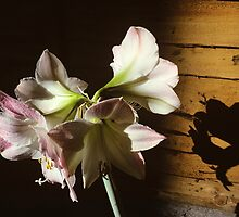 Garden Lilies by secondcherry