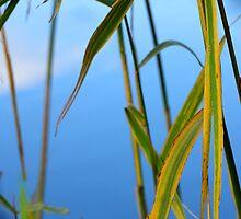 Autumn Green by Evert Lancel