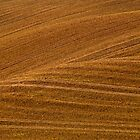 Tracks in the Sunny Soil by Lars Klottrup