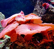 Pink Saltwater Mushrooms by Johnny Furlotte