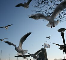 Seagulls getting a Boxing Day Feast! by Pamela Jayne Smith