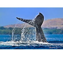 Whale Series #707 Photographic Print
