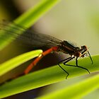 Damselfly by AnnieSnel