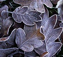 Frozen Leaves by Chris  Tumbusch