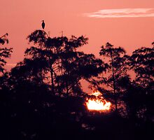 Sun Rise on the Florida Everglades. by Chris  Tumbusch