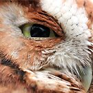 WATCHFUL EYE (Eastern Screech Owl) by Lori Deiter