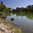 Central Park Pond by John Caetano