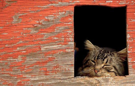 Sleeping Cat In the Dog House by georgiaart1974