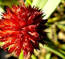 Star Flower by Paul Navarrette