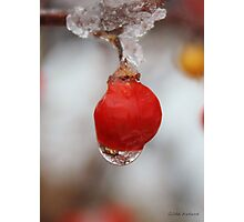 Melting Ice on a Red Berry Photographic Print