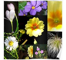 Collage of Spring plants-Dec 2008! Poster