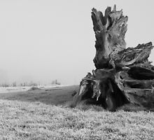 Stumped by Jon Bradbury