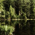 A lake in the forest by Kay Martin