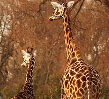 Like Mother Like Daughter by Franco De Luca Calce