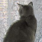 Cat 'n' Curtain by Jan Morris