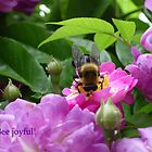 Bee Joyful! by Jan Morris