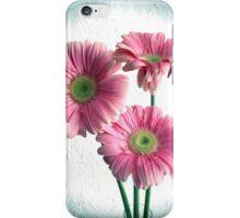 Spot Light On Gerbera Pink Daisies iPhone Case/Skin