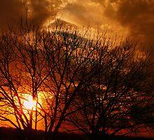 Sunset at Brazilian savannah by jcpatricio