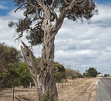 Ye Old Tree by Fred  Smith