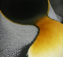 King Penguin Feathers by Marylou Badeaux