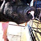 Sexy Piggy by soulphoto
