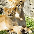 Mother Lion and Cub by Ian Phares