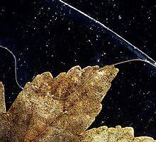 Sycamore Leaf Encased in Black Ice by JulieP