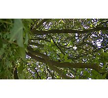 Windy Day - The Blue & The Green 014 Photographic Print