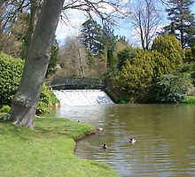 Sheffield Park Gardens Waterfall by sjmphotos