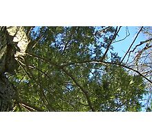 Windy Day - The Blue & The Green 028 Photographic Print