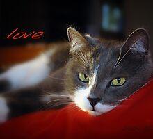 The Look of Love © Vicki Ferrari Photography by Vicki Ferrari
