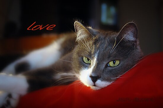 The Look of Love © Vicki Ferrari Photography by Vicki Ferrari