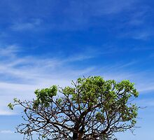 Boab Tree, Broome by Michael Bates