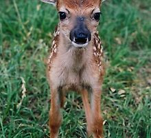 Rescued Fawn by Catherine  Howell