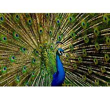 Peacock Eyes Photographic Print